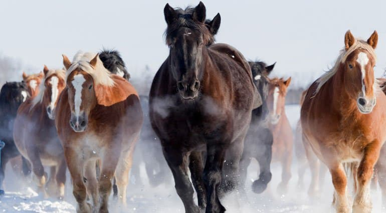 The Myers-Briggs® Assessment – A Horse Of A Different Color